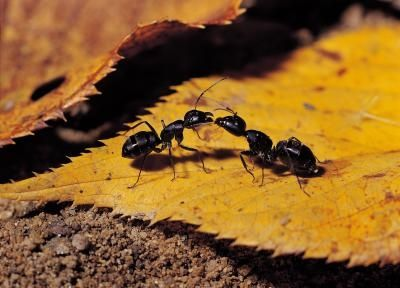 The Generation Of Ants: The Lives Of Ants