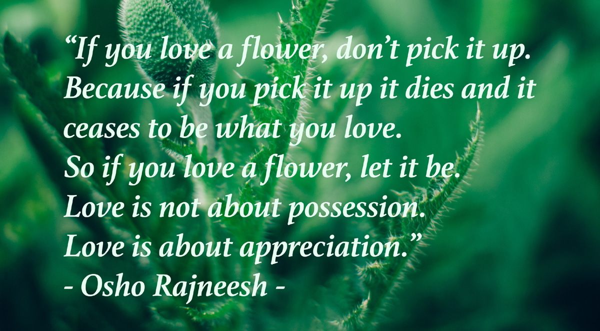 Osho Rajneeshs Quote If You Love A Flower Wisdoms Webzine